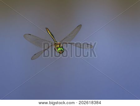 beautiful dragonfly with large eyes and shining wings flying over the pond right