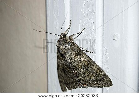 the butterfly in the house, the butterfly is waiting for its life to be filled, the butterfly is waiting to die