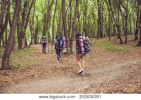 Adventures here we come! Rear view of three tourists walking in the forest one after each other all having backpacks mates tey turn from a trial inside to a wild forest