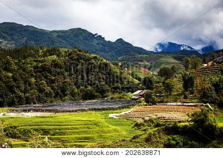 green paddy fields around Ma Tra village in the summer, Sa Pa, Vietnam
