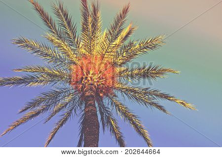 Palm tree on a beach. Low angle shot of the treeline with foliage on colorful sky background. Trendy hipster funky toning. Copy space. Vacations traveling concept. Poster card template.