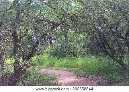 Sunlight filtering through a canopy of trees shines down on a wheelchair accessible trail at Dead Horse Ranch State Park in Cottonwood, Arizona