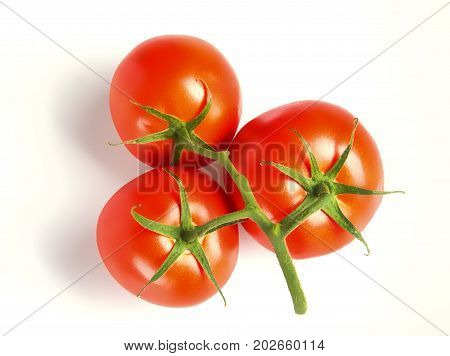 Group of three tomatoes with vine attached