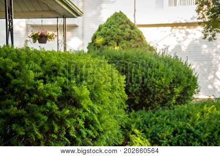 Home Yard Hedges