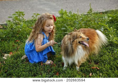 Cute little girl with a dog Sheltie breed. Best friends forever. Dog devotion. Girl and pet darling in the park