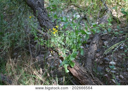 Tiny yellow wildflowers and green leaves cover fallen tree branch in the forest