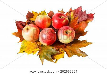 Apples and autumn leaves isolated on white background