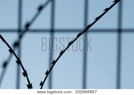 Barbed Wire Close-up Against The Blue Sky