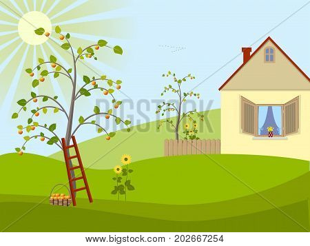Rural landscape, house, apple-trees and sunflowers in the yard, harvesting of apples, flock of flying birds on the horizon. Vector illustration
