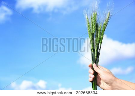 Female hand holding wisp of green wheat against blue sky