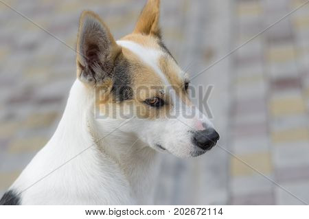Outdoor portrait of nice stray cross-breed white dog