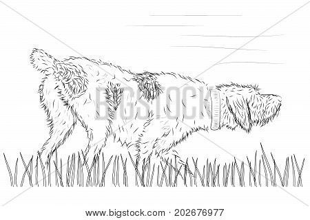 vector hunting dog pointer on the grass during hunt