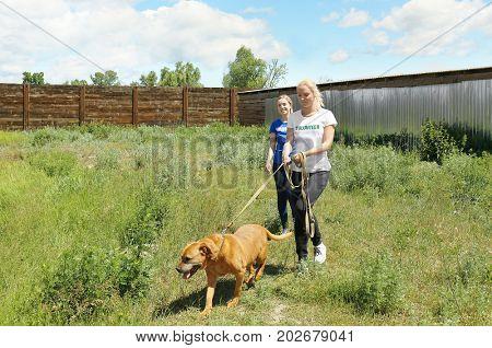 Female volunteer walking dog on the territory of animal shelter