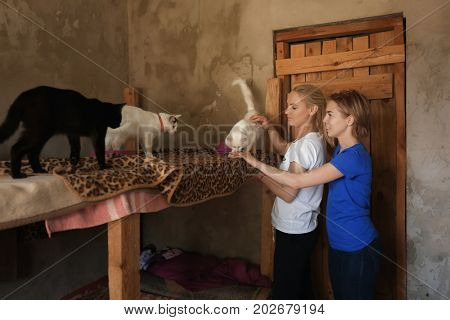 Female volunteers petting homeless cat in animal shelter