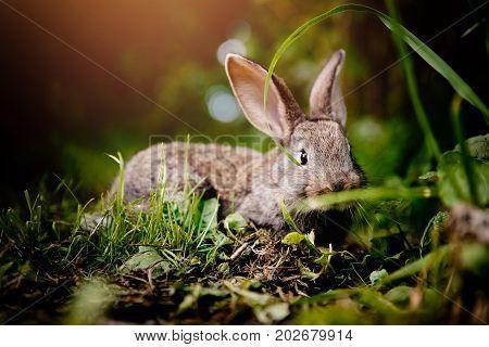 brownish gray little rabbit on a light green background. Concept farm.