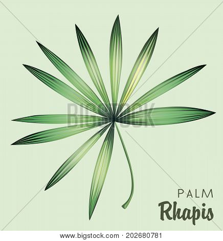 Lady palm leaf. Isolated color object on a gray background