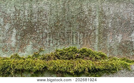Moss and lichen on a wall. Moss is in line in the bottom.