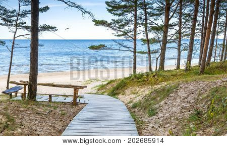 Coastal landscape with pine trees and sand dunes, Baltic Sea