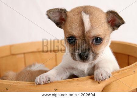 Pop-up Puppy