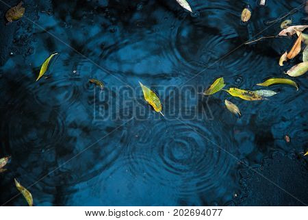 Yellow And Green Leaves On Asphalt And Puddles