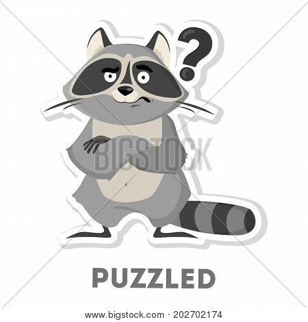 Isolated puzzled raccoon with question marks on white background.