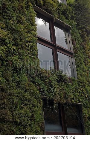 The windows of the house are covered with green vegetation. Quay Branly in Paris France.