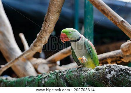 Cute Green Parrot