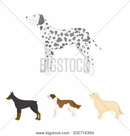 St. Bernard, retriever.doberman, labrador. Dog breeds set collection icons in cartoon style vector symbol stock illustration .