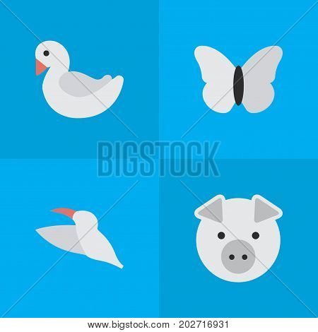 Elements Moth, Piggy, Swan And Other Synonyms Piggy, Crane And Swine.  Vector Illustration Set Of Simple Zoo Icons.