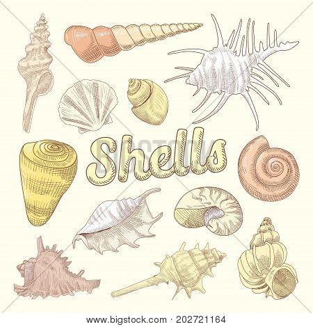 Seashells Hand Drawn Aquatic Doodle. Marine Sea Shell Isolated Collection. Vector illustration