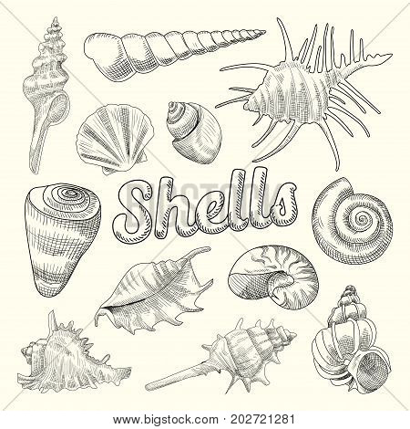 Seashells Hand Drawn Aquatic Doodle. Marine Sea Shell Isolated Elements. Vector illustration