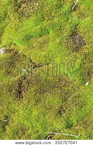 green moss is very beautiful and looks vividly in the photo