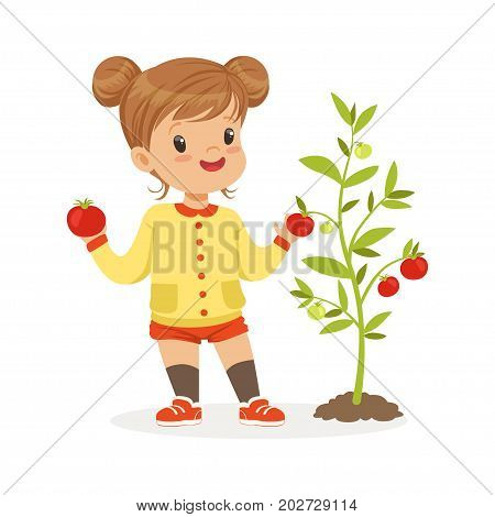 Sweet little girl picking tomatoes in the garden, kids healthy food concept colorful vector Illustration on a white background