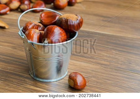 Close up of Fresh chestnuts in metal bucket on wooden background with copy space .Autumn fall harvest concept.
