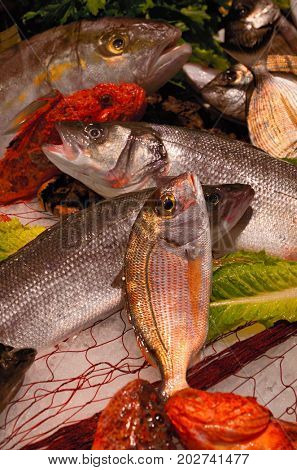 An array of fresh fish sits on display in a fishmongers counter