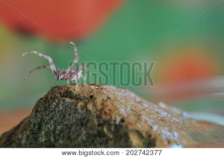 Close-up of Pink Spider on Stone Macro Theme