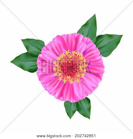 flower. view from above. colored illustration on a white background