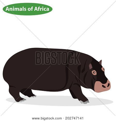 Hippopotamus a Hippopotamus icon African animals. Flat design vector illustration vector.
