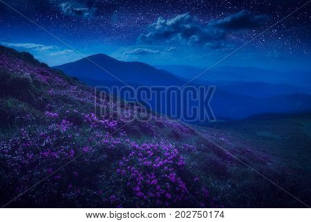 Mountain Hill Covered With Meny Purple Flowers