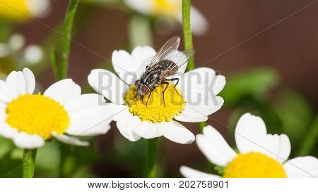 Small Fly Resting