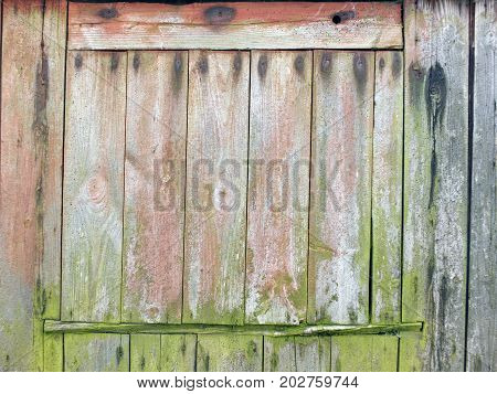 faded weathered planks on a rustic shed or farmhouse barn or outbuilding with green moss and traces of old red paint