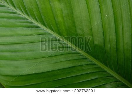 Close up of abstract green leaf pattern