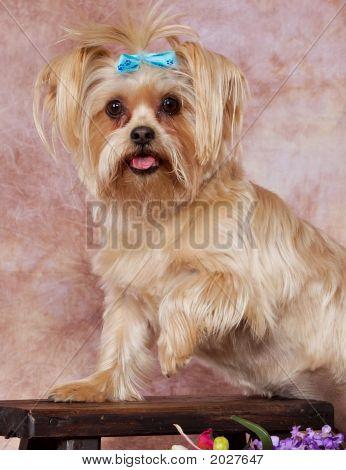 Dogposed