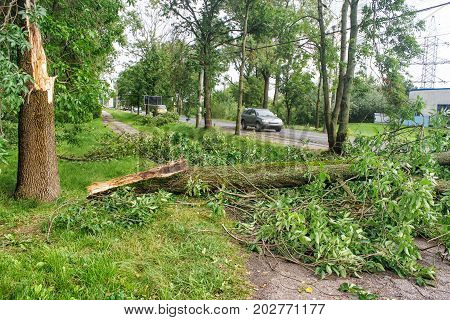 large tree broken by a storm lies on the road on summer day