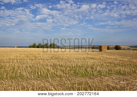 Oilseed Rape Stubble And Scenery