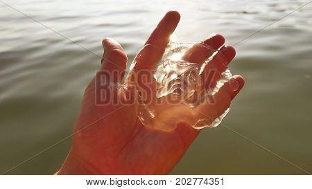 The man is holding jellyfish. sunset jellyfish holds man danger allergy sunlight sea