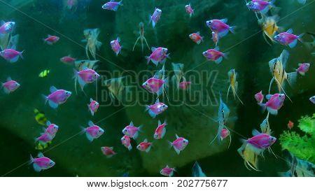 fish pink underwater in ocean. Fish swim in video 4k sea of beautiful ocean