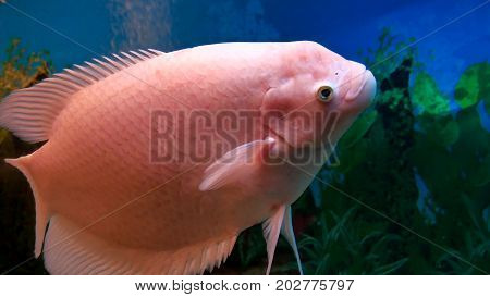 fish beautiful underwater in ocean. Fish swim in sea of video 4k beautiful ocean