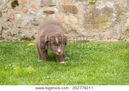 Curious Brown Puppy In The Garden