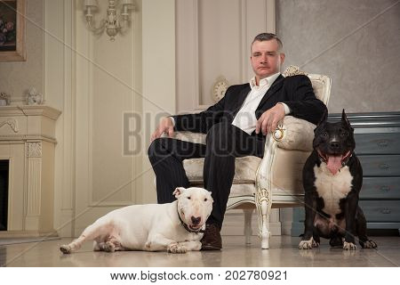 Man seating in armchair. Dogs: black pit bull or stafforshire terrier white bull terrier seatting in the legs of man in vintage studio